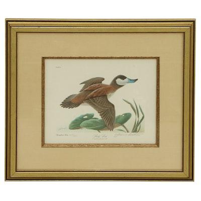 "John A. Ruthven Offset Lithograph ""Ruddy Duck,"" Late 20th Century"