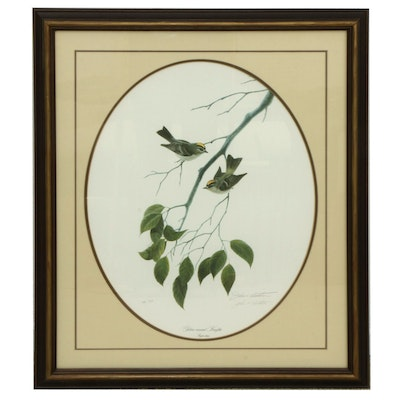 "John A. Ruthven Offset Lithograph ""Golden-Crowned Kinglets,"" Late 20th Century"