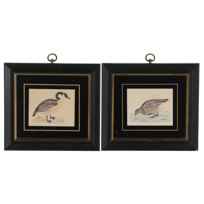 Illustrative Ornithology Offset Lithographs