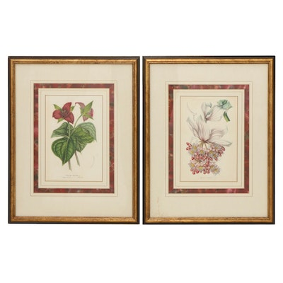 Horto Van Houtteano Hand-Colored Lithographs, Late 19th Century