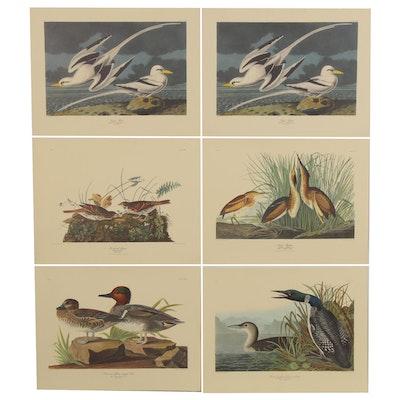 Offset Lithographs after John Audubon of Bird Illustrations, Late 20th Century