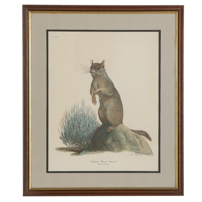 """Ray Harm Offset Lithograph """"California Ground Squirrel,"""" Late 20th Century"""