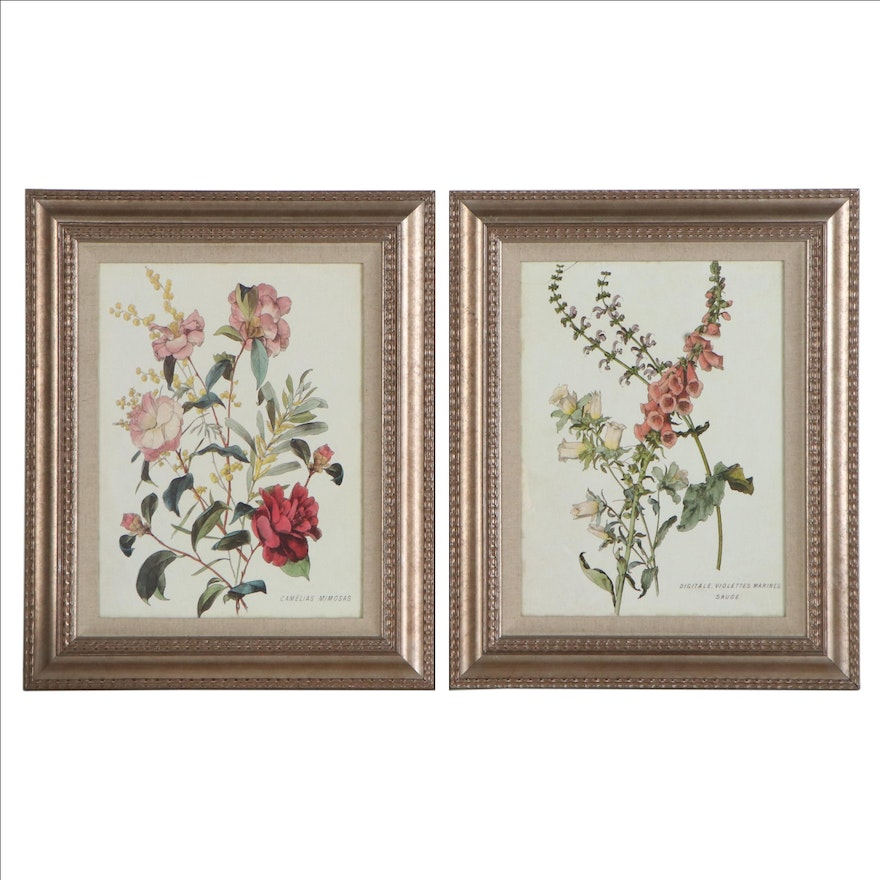 Offset Lithographs of Floral Species, Late 20th Century