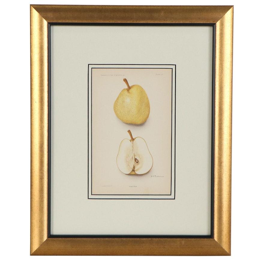 "A. Hoen & Co. Mixed Media Print ""Ayer Pear,"" Early 20th Century"
