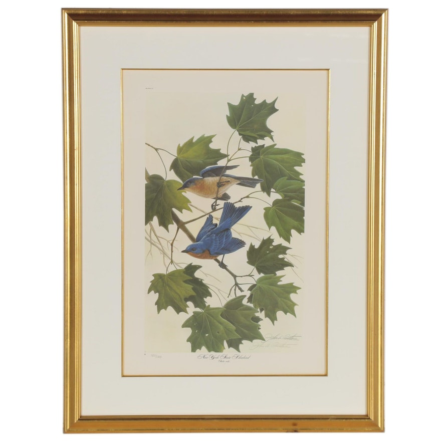 "John Ruthven Offset Lithograph ""New York State Bluebird,"" Late 20th Century"