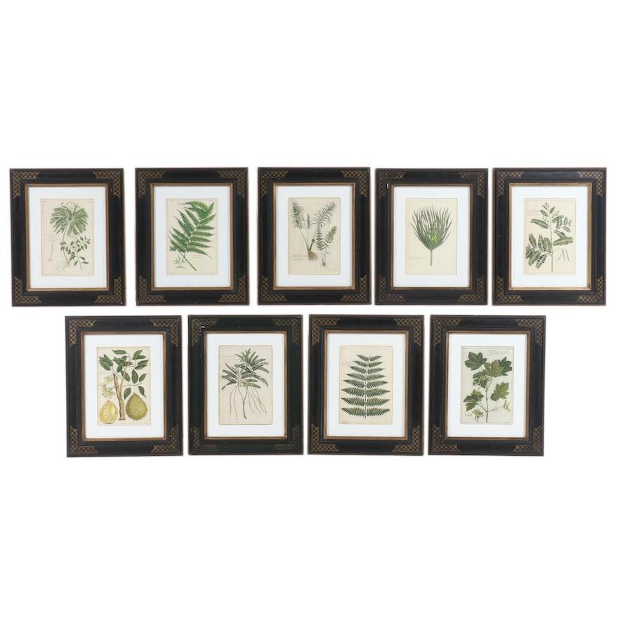 Botanical Illustration Prints in Custom Hand-Painted Trowbridge Frames