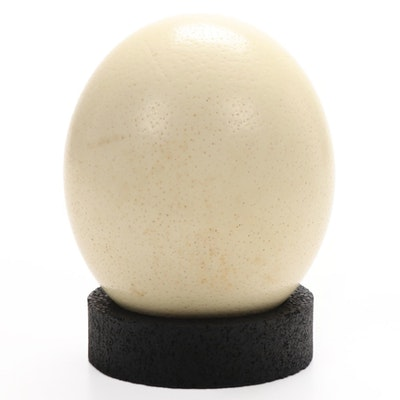 Ostrich Egg with Stand