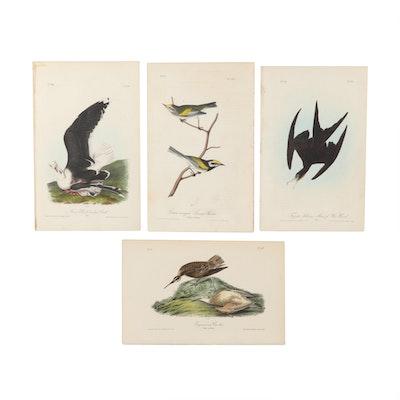 """J.T. Bowen Color Lithographs after John James Audubon """"Birds of America"""""""