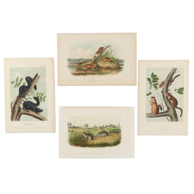 """J.T. Bowen Color Lithographs from John James Audubon """"Viviparous Quadrupeds"""""""