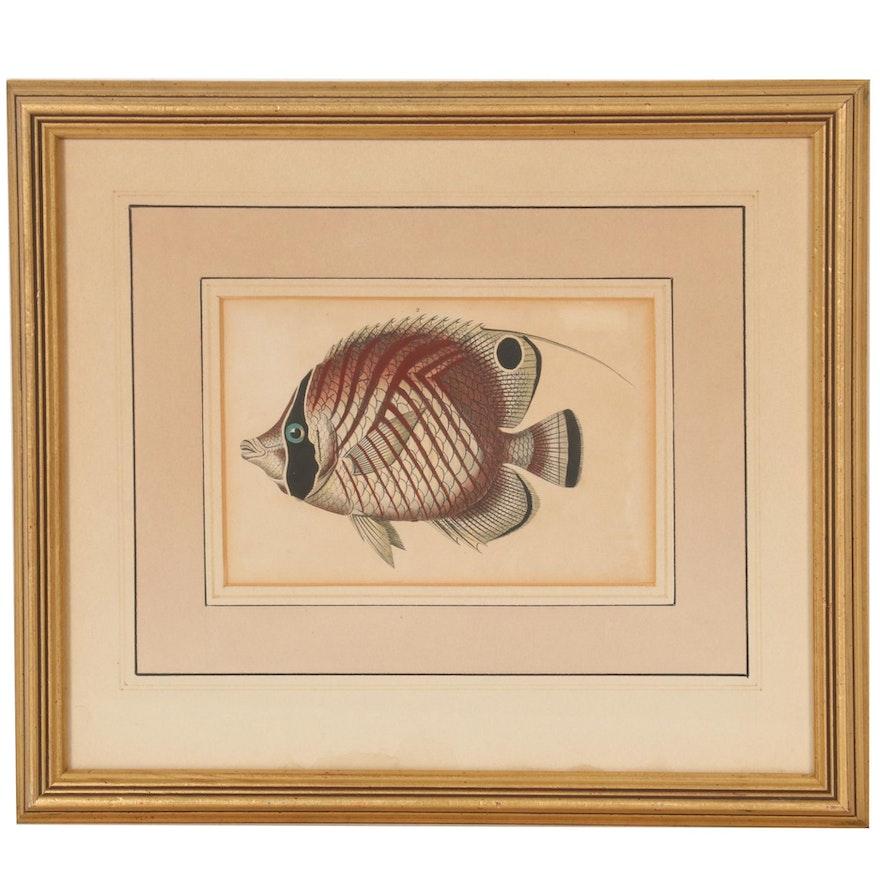 "John Pass Engraving ""The Bristled Chaetodon"" from ""Encyclopaedia Londinensis"""