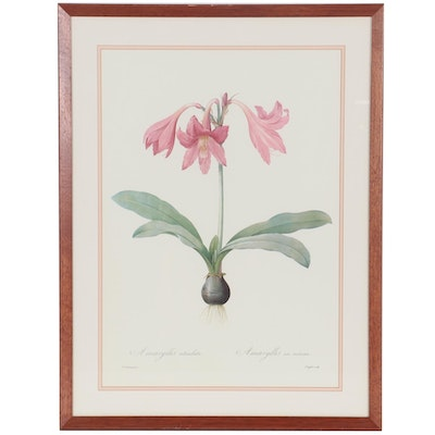 Botanical Study Offset Lithograph after Pierre Joseph Redouté, Late 20th Century