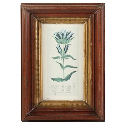 "Botanical Offset Lithograph ""Gentiana Catesbaei"""