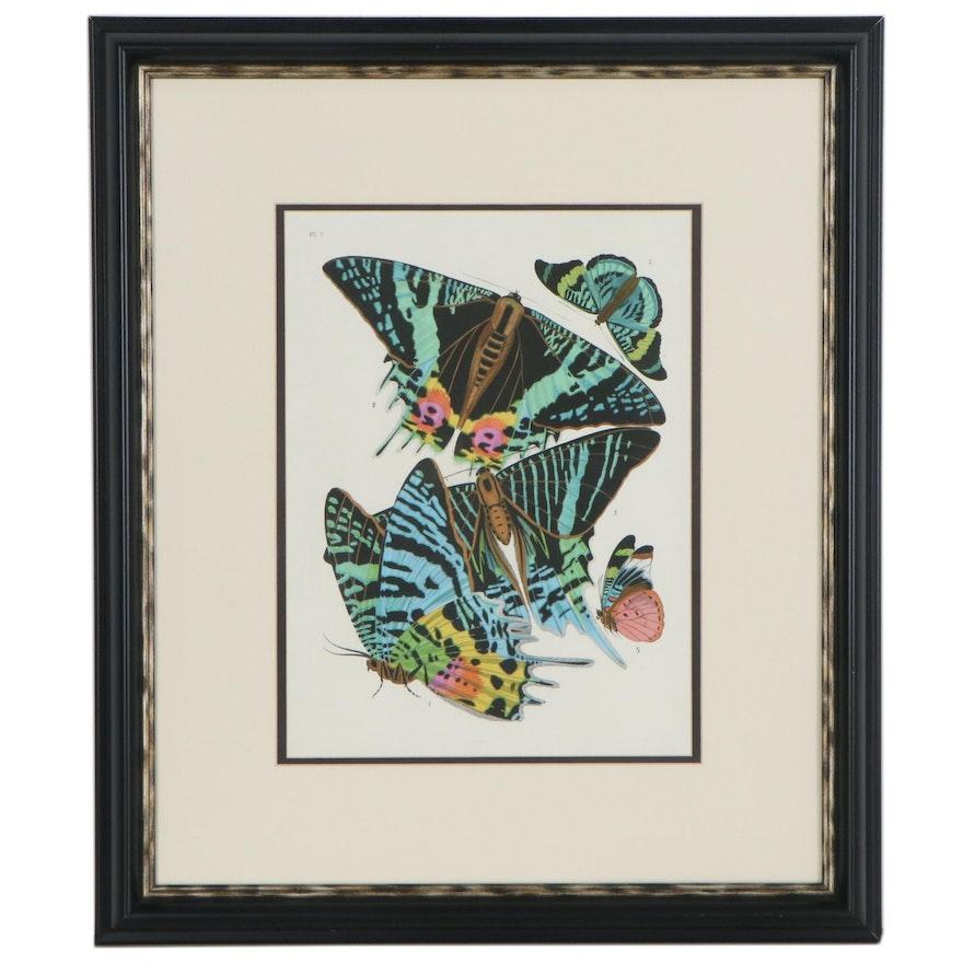 Giclée of Butterfly Species, 21st Century