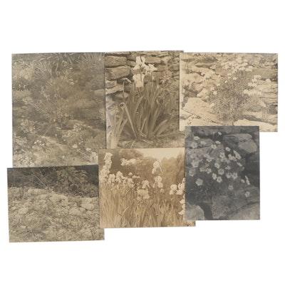 Charles A. Weddigen Silver Gelatin Pictorialist Botanical Landscape Photographs