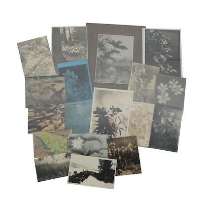 Charles A. Weddigen Silver Gelatin Pictorialist Botanical Photographs