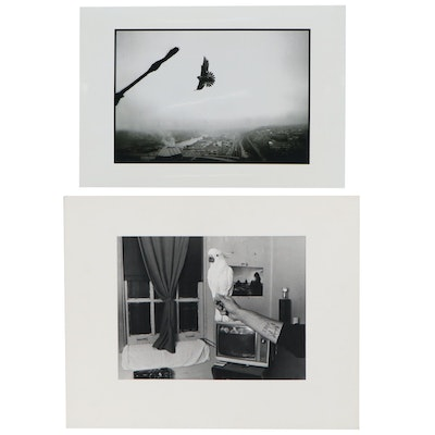 William D. Wade Photographs with Birds, 21st Century