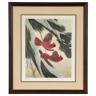"John A. Ruthven Offset Lithograph ""Cardinal"""