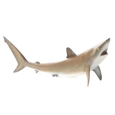 Blacktip Shark Replica Wall Mount