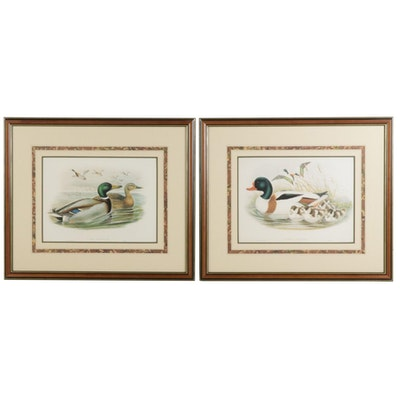 "Offset Lithographs after John Gould ""Tadorna Vulpanser"" and ""Anas Boschas"""