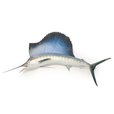 Blue Sailfish Fiberglass Fish Wall Mount