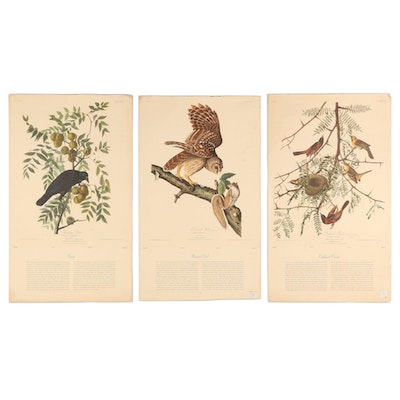 Offset Lithographs of Birds after John James Audubon