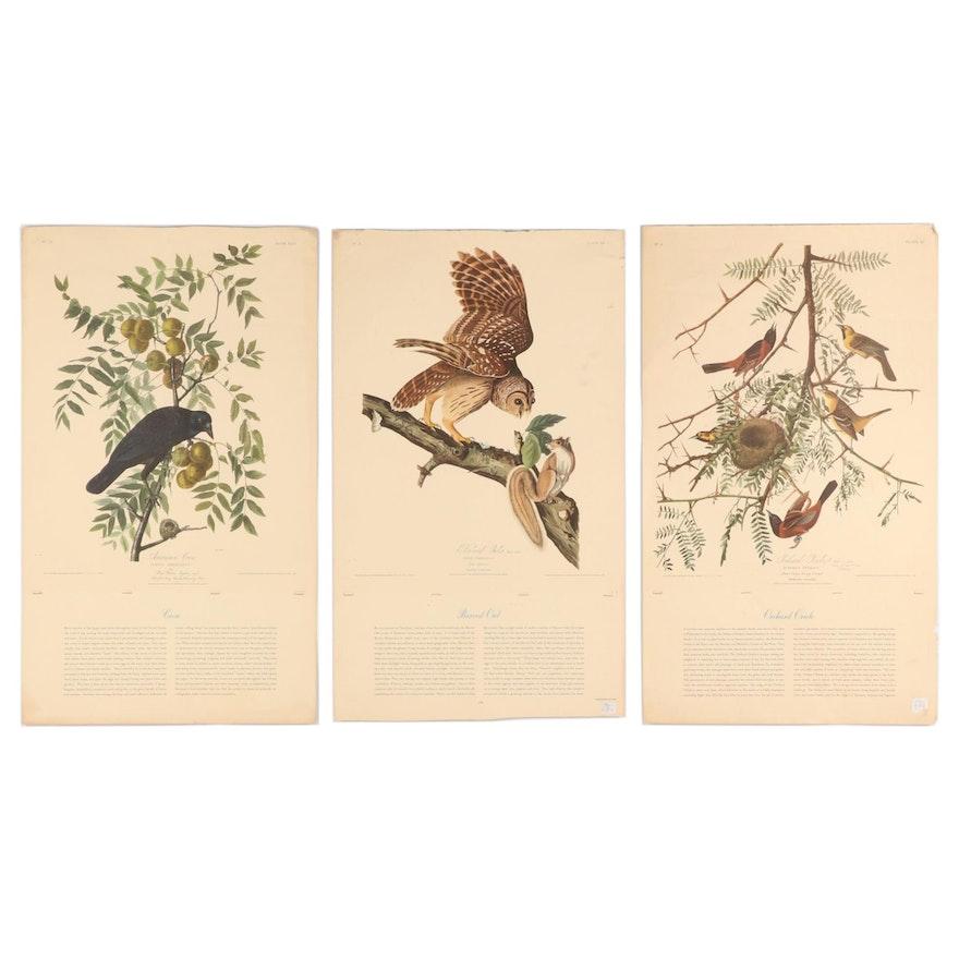 Offset Lithographs of Birds after John James Audubon