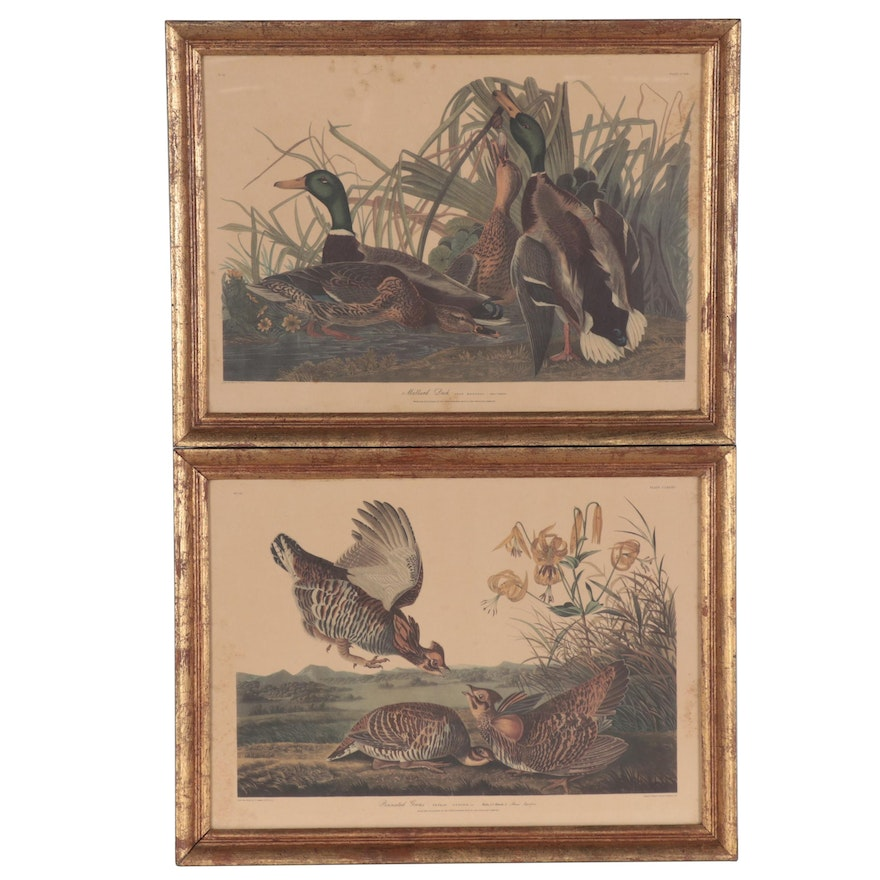 Offset Lithographs after Robert Havell and John James Audubon, Late 20th Century