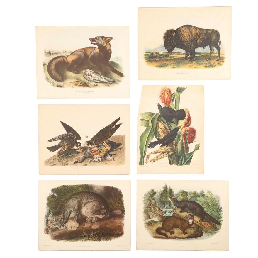 Offset Lithographs after J.J. Audubon of Birds and Animals
