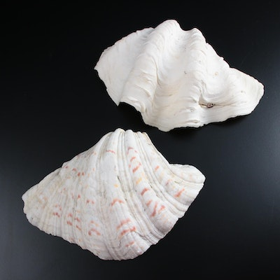 Pair of Giant Clam Shells Nautical Decor