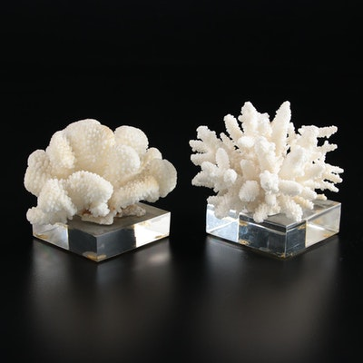 Scleractinian Coral Specimens Mounted on Acrylic Bases