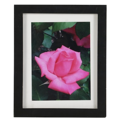 Barbara Sweney Photograph of a Pink Rose
