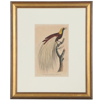 """Robert Havell Hand-Colored Engraving """"The Large Emerald Bird of Paradise"""""""