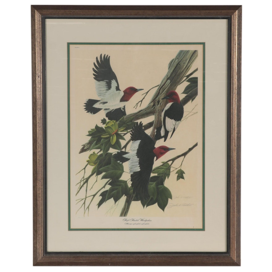 """John A. Ruthven Offset Lithograph """"Red-Headed Woodpecker,"""" Late 20th Century"""
