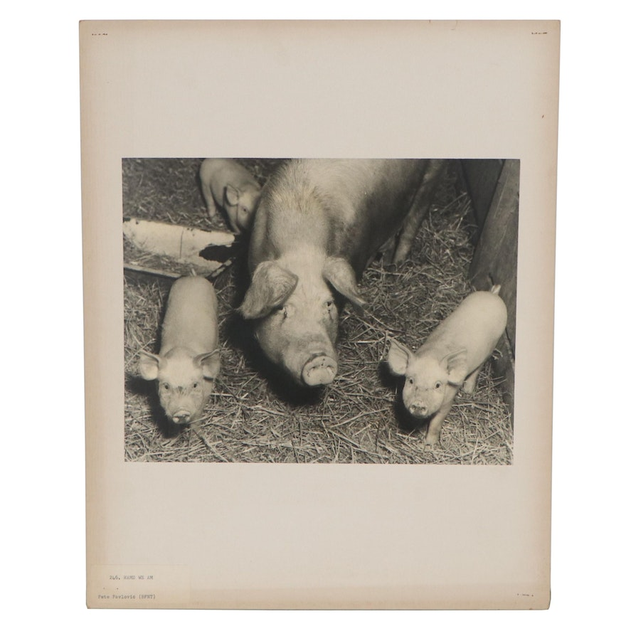 "Silver Gelatin Photograph Attributed to Pete Pavlovic ""Hams We Am"""