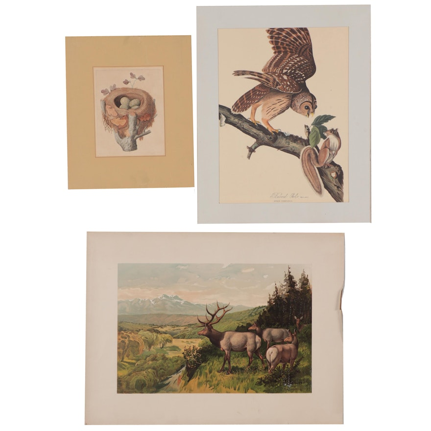 Etching, Chromolithograph and Offset Lithograph of Wildlife