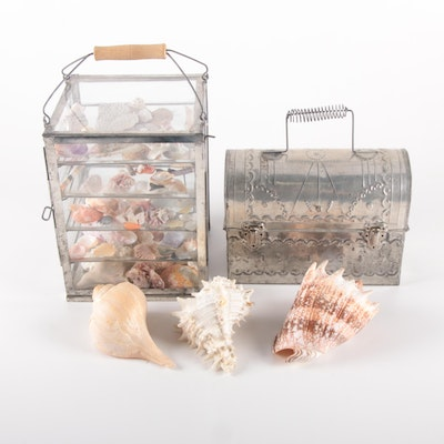 Conch, Whelk, Murex, Mussels, Other Seashells with Metal and Acrylic Cases