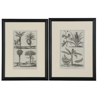 """Robert Bénard Restrike Botanical Engravings from Diderot's """"Encyclopédie"""""""