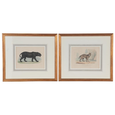 William Panormo Hand-Colored Etchings