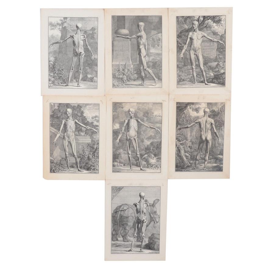 Anatomical Lithographs after Jan Wandelaar