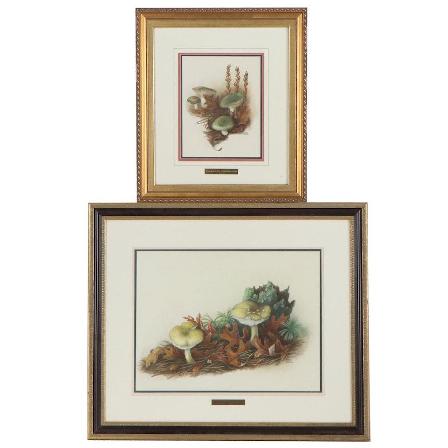 Marcia Gaylord Norman Botanical Watercolor Paintings of Mushrooms