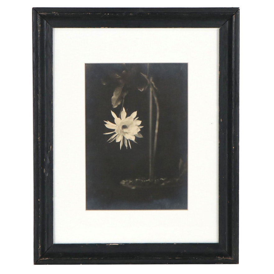 Silver Gelatin Photograph of Night Blooming Cereus, Late 20th Century