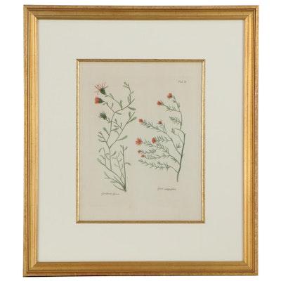 Botanical Illustration Hand-Colored Engraving