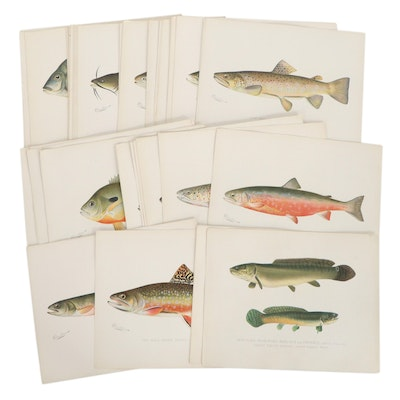 Chromolithographs after Sherman Foote Denton of Fish Species, Circa 1900