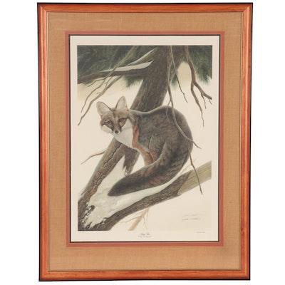 "John A. Ruthven Offset Lithograph ""Gray Fox"""