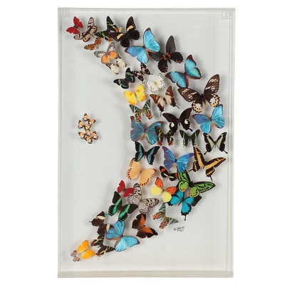 De Young Butterfly Specimens Display in Acrylic Case, 1997