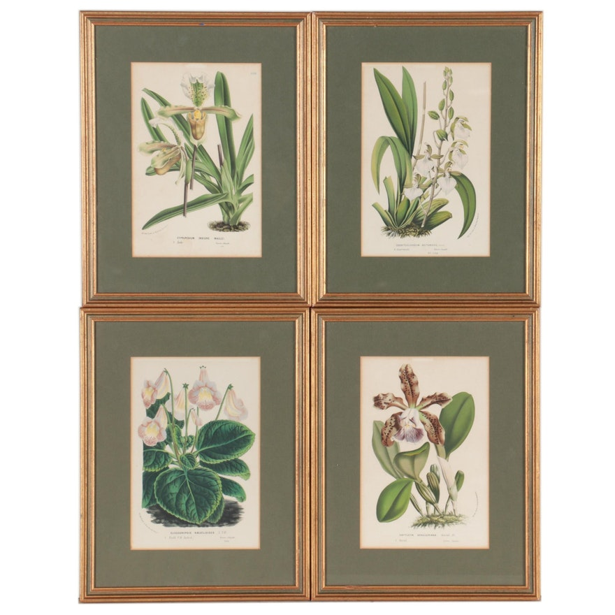 Botanical Hand-Colored Lithographs after Louis Benoît van Houtte