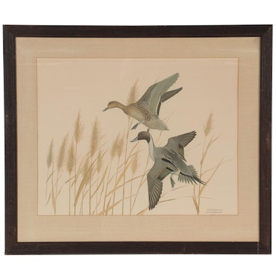 """William Harold Zimmerman Offset Lithograph """"Pintail,"""" Late 20th Century"""