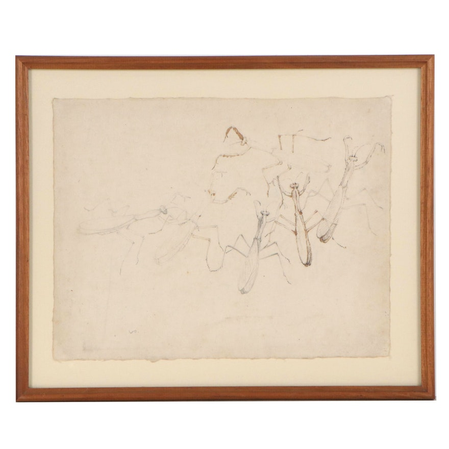 Walter Stein Mixed Media Drawing of Praying Mantis, Mid-20th Century