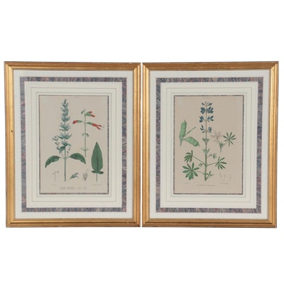 Ludovico Petraroja Hand-Colored Lithographs of Botanical Species