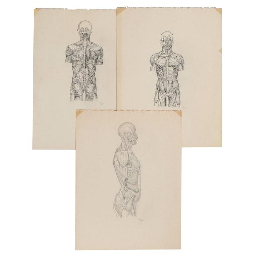 Robert Szesko Pen and Ink Human Anatomy Drawings, 1976